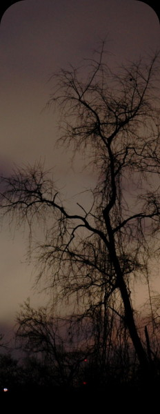 a tree at night