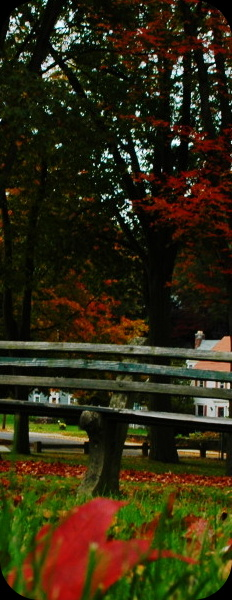a lonely bench in the park in waterbury, ct with fall colors