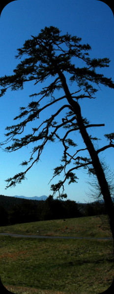 silhouette of a tree on the biltmore estate by the winery